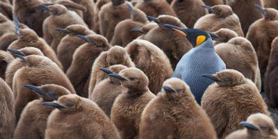 penguin standout differentiate